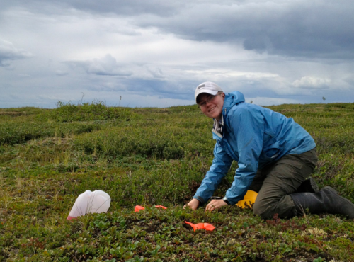 The Arctic tundra is an incredibly beautiful system in which to study diversity and unusual functional community structure. Here, I am happily installing pan traps along the Dempster Highway in the Yukon. Photo credit: C. Buddle