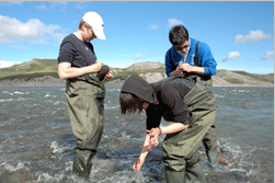 Sampling aquatic insect with high school students from Kugluktuk, NU and ArcticNet's Schools On Board program (credit: ArcticNet)